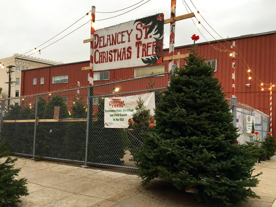 Delancey Street Christmas Trees.Buy A Christmas Tree Do Good At Delancey Street S New