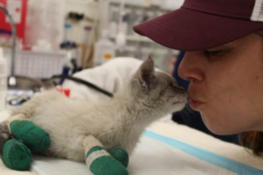 Sf Agencies Mobilize To Save Animals Injured Or Lost In Camp Fire Here S How You Can Help Hoodline