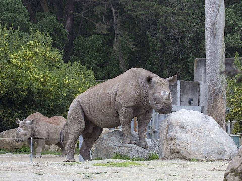 Black rhinos elly and boone.jpg?ixlib=rails 0.3