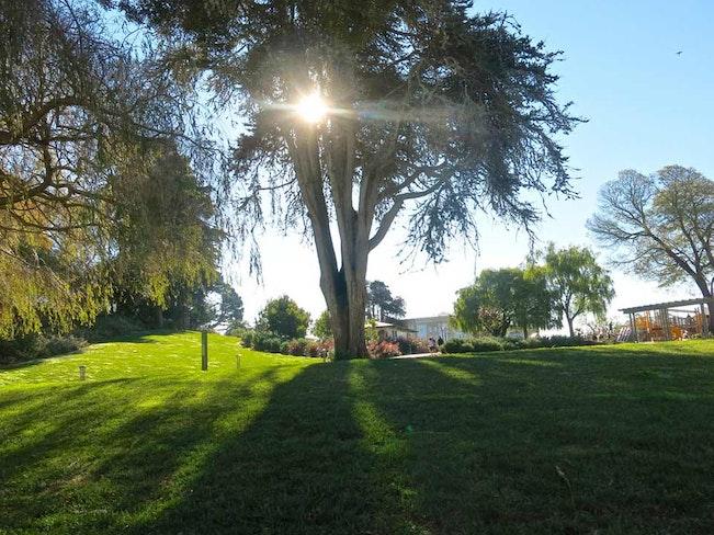 Lafayette park torbakhopper