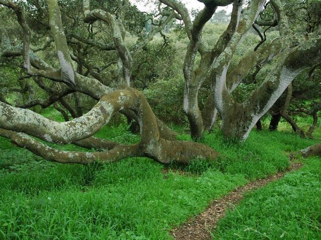 Ow oaks 2005e