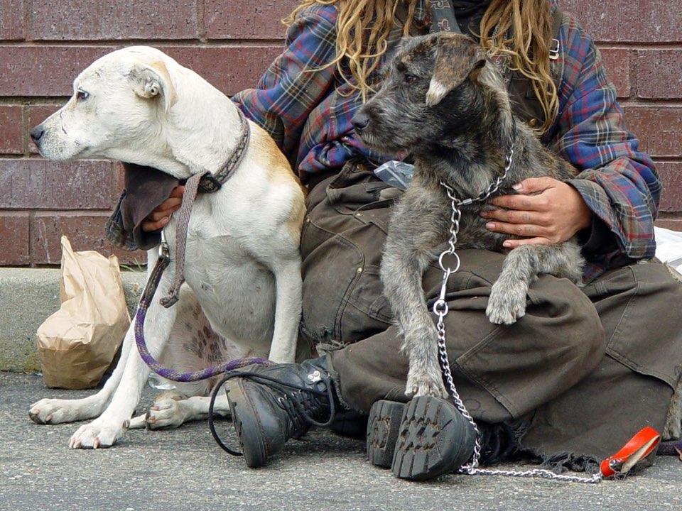 Vet SOS, SPCA Keep San Francisco's Homeless Pets Healthy