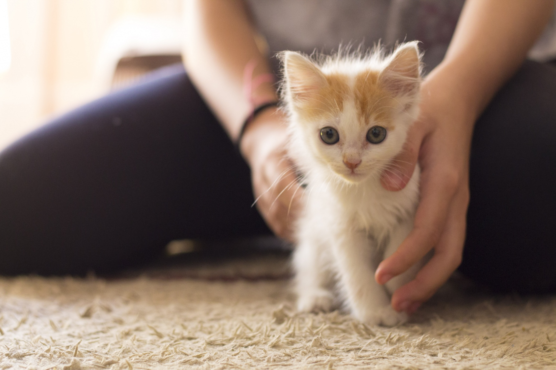 Your daily dose of cute: Kittens up for adoption now in Philly