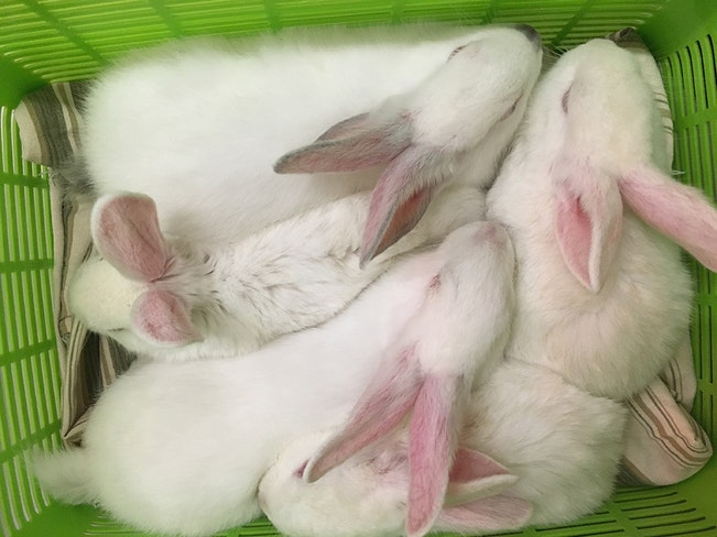 Bunnies in carrier