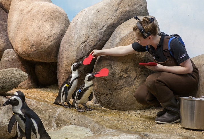 Penguin valentine 2015 1814 web