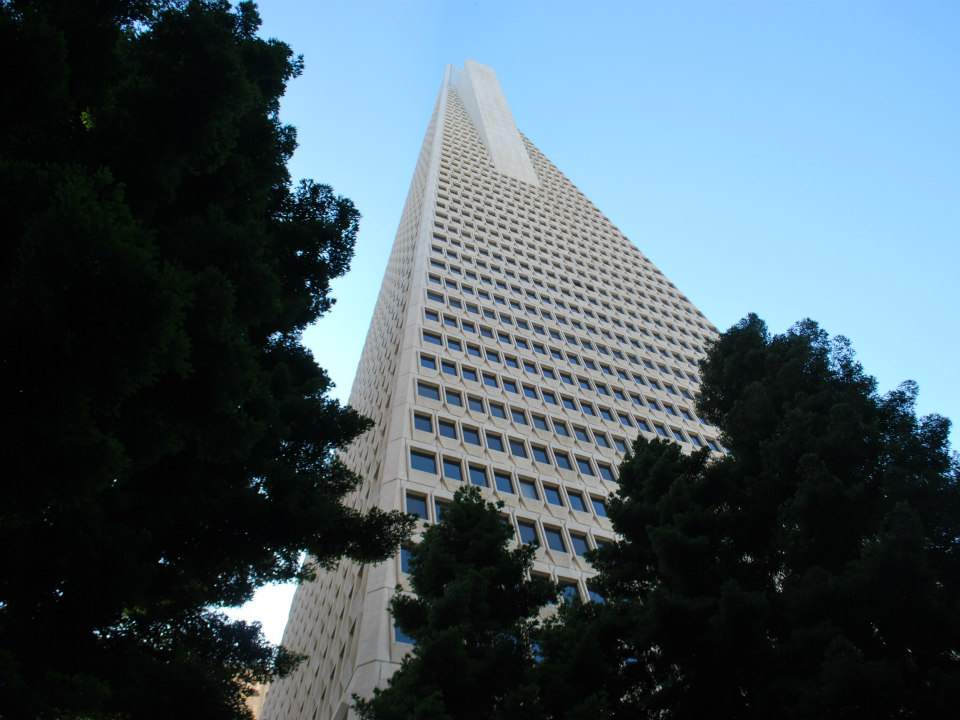 San Franciscos Nameless Giant In Search Of The Citys Tallest Tree