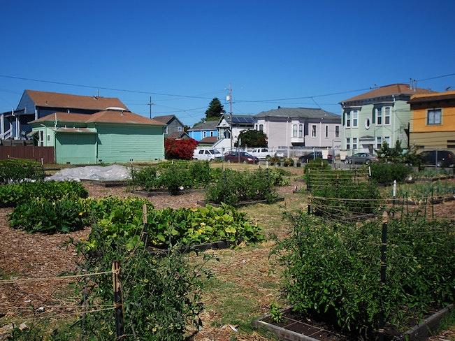 Oakland campbell farm