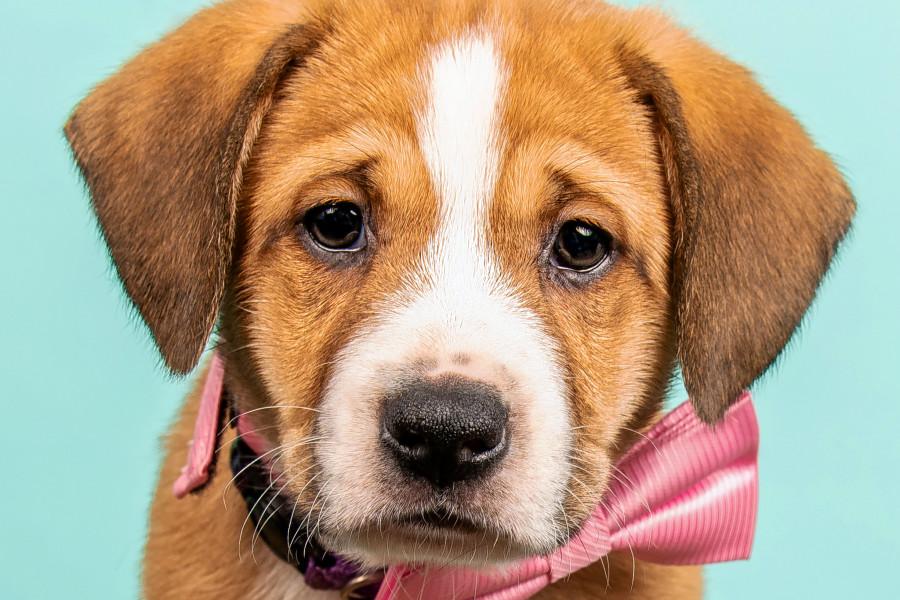 Puppies in Cincinnati looking for their furr-ever homes