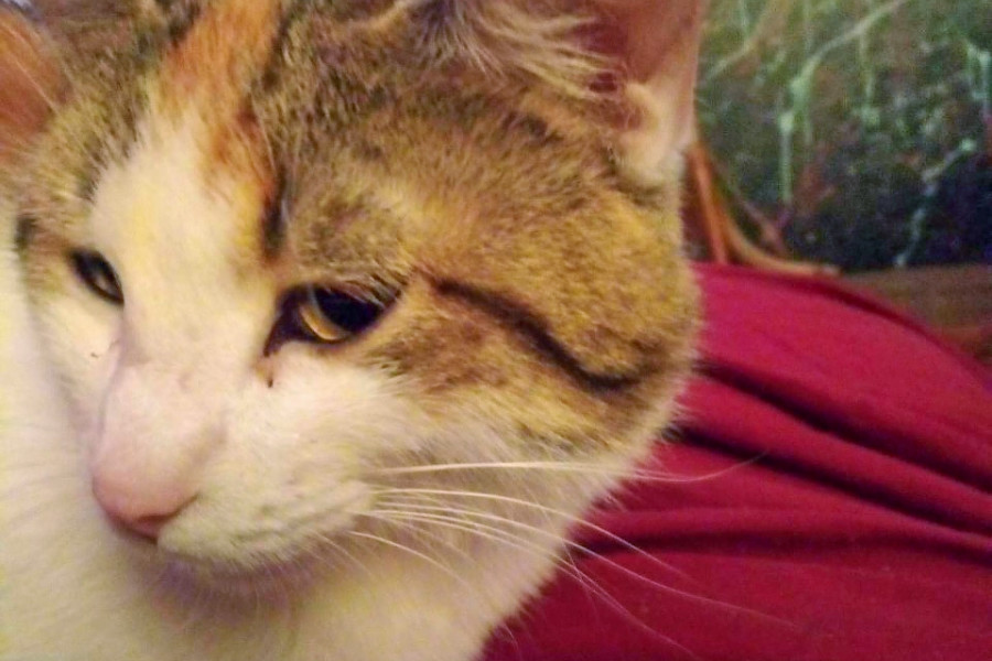 Cats in Omaha looking for their furr-ever homes   Hoodline