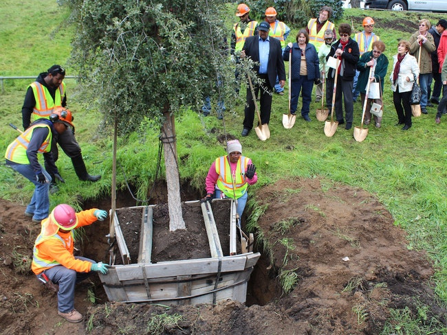 Arbor day 2016 by public works