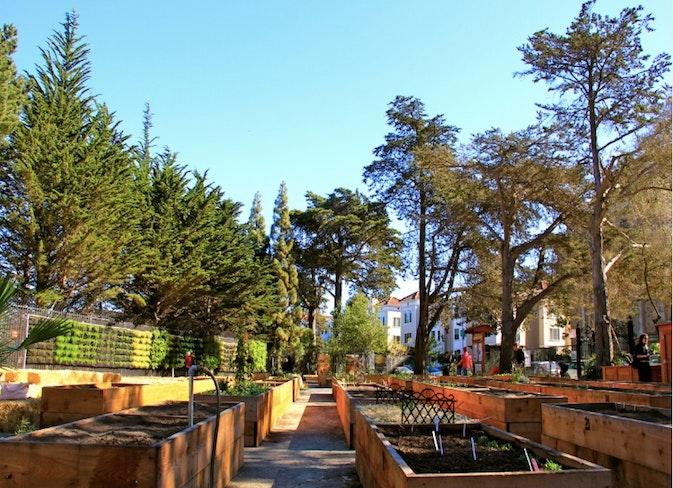 Golden gate community garden sf rec and park