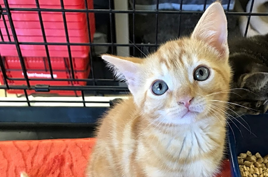 Kitten alert These furry felines are up for adoption in and