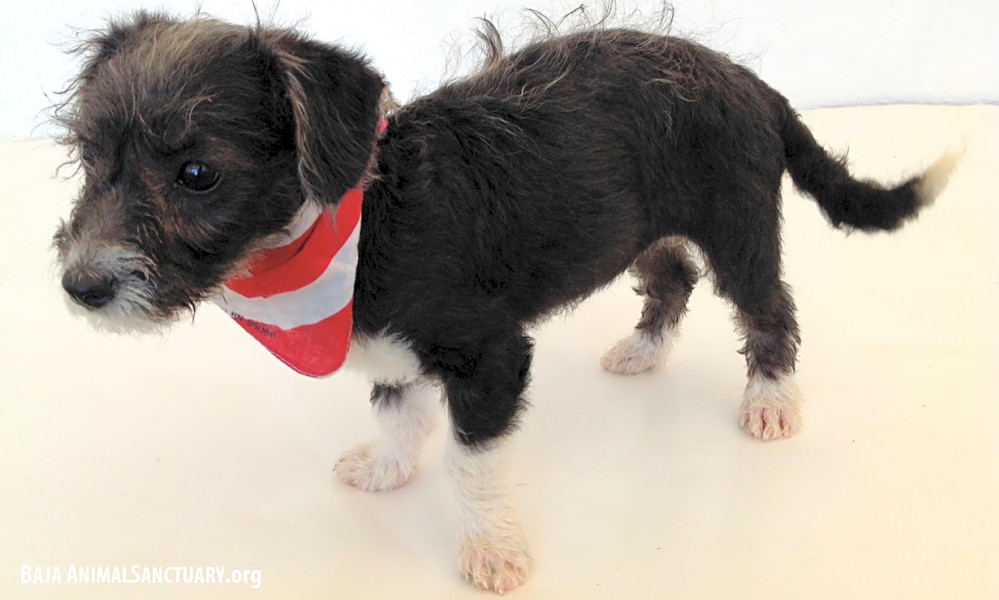 4 adorable puppies to adopt now in San Diego | Hoodline