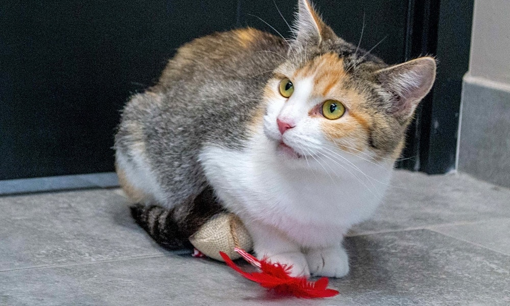 These Chicago,based cats are up for adoption and in need of