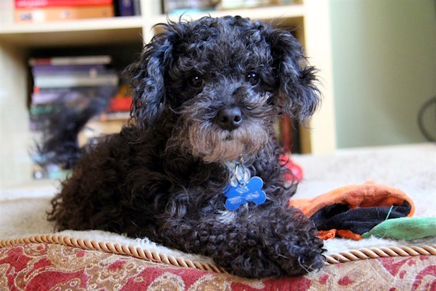 7 Lovable Pups To Adopt Now In Portland Hoodline