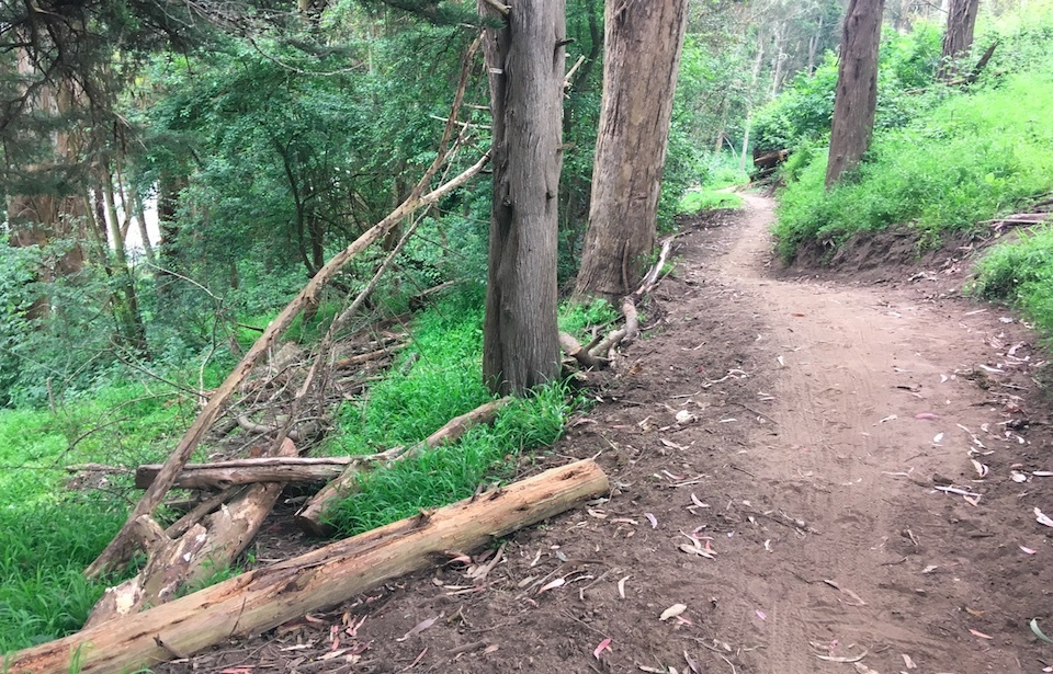 Fallen trees were removed to clear some portions of the trail
