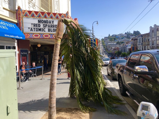 Palmtree1 bracco