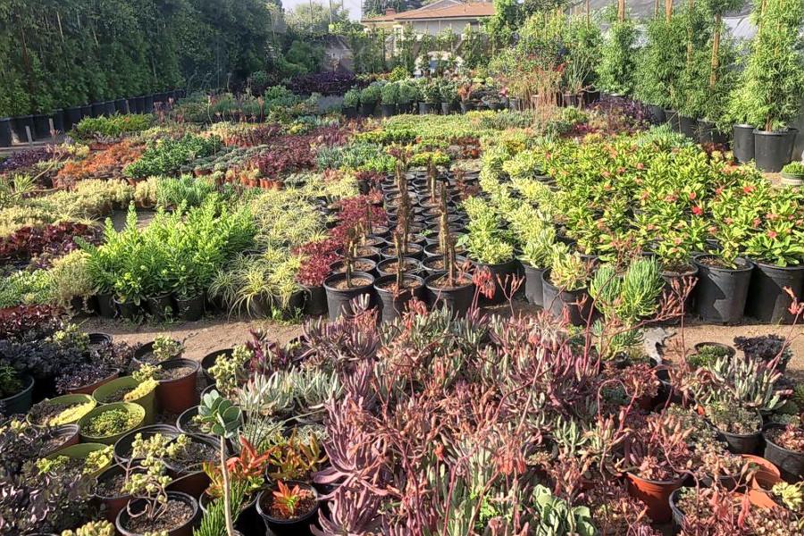 Plant Nurseries In Long Beach