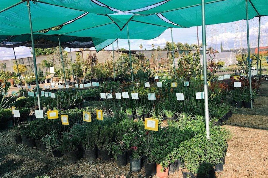 Budget Friendly Plant Nurseries